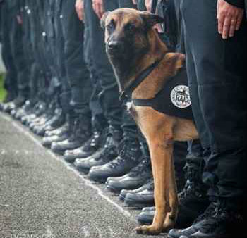 (Divulgação/Police National)
