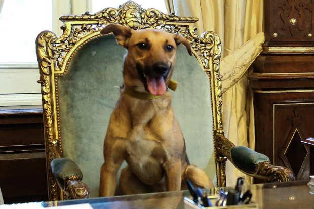 Balca foi adotado durante a campanha presidencial Foto: Divulgação/Facebook