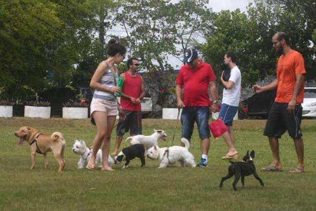 Espaço permite a entrada de cachorros. Foto: Kennel Club/Divulgação