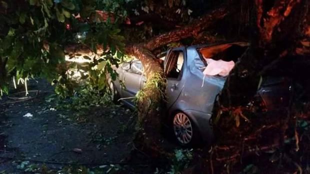 Duas pessoas ficaram presas após uma árvore cair sobre um carro na Praça do Derby. Foto: Reclamo Recife/Facebook/Reprodução