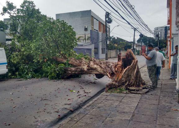 Rua das Creoulas está interditada na Zona Norte. Serviços devem se estender durante toda a manhã deste sábado. Foto: Augusto Freitas/DP