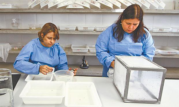 Fiocruz busca maneiras de neutralizar avanço domosquito. Foto: Paulo Paiva/ DP