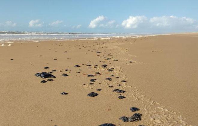 Ibama confirma placas de óleo ao longo de 17 quilômetros de areia na praia da Reserva Biológica de Santa Isabel, em Sergipe.  Foto: Banco de Imagens/Ibama.