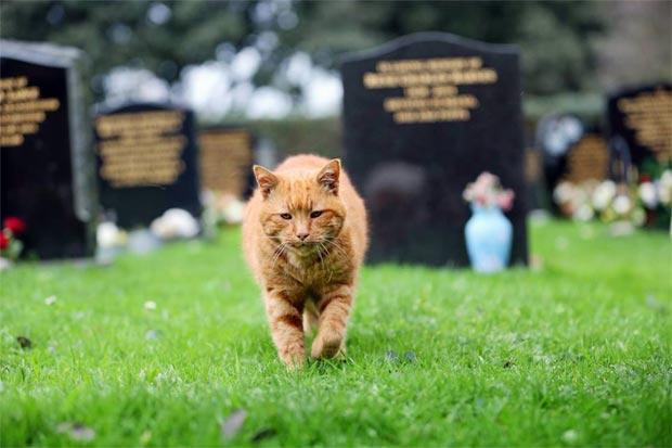 Barney era famoso pelo carinho com os visitantes do cemitério. Foto: Guernsey Press/Facebook/Reprodução