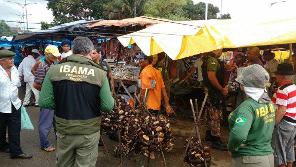 Agentes do Ibama recolhem crustáceos no Mercado do Cabo de Santo Agostinho. Foto: Ibama PE/Divulgação