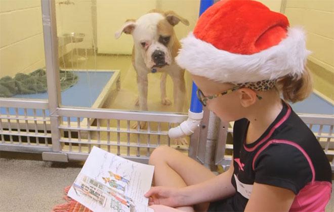 As crianças passam algumas horas lendo para os cães, enquanto os animais reconquistam a confiança nos humanos. Foto: Divulgação