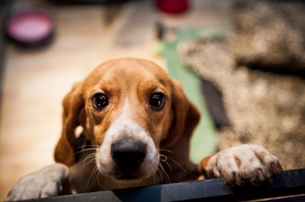Evento acontece em parceria com a ONG Pet PE. Foto: Internet/Reprodução