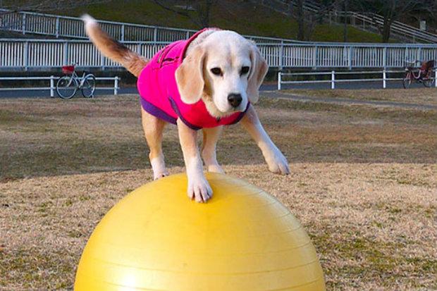 A rotina da cadela inclui 15 minutos de treino por dia. Foto: Guinness World/Reprodução.