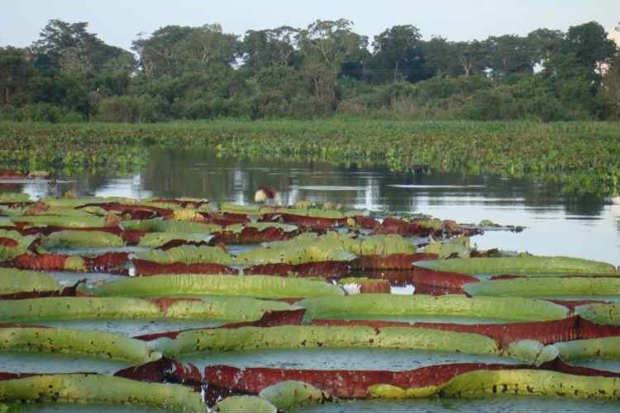 Parque Nacional do Pantanal Mato-Grossense abriga de tucanos, cervos e tuiuius a jacarés e capivaras. Foto: Raphael Milani/Flickr.