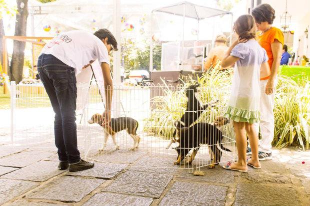 Evento reúne 60 cachorrinhos e gatos para adoção responsável. (Foto: Felipe Holanda/GiGi Pet Sitter/Divulgação)