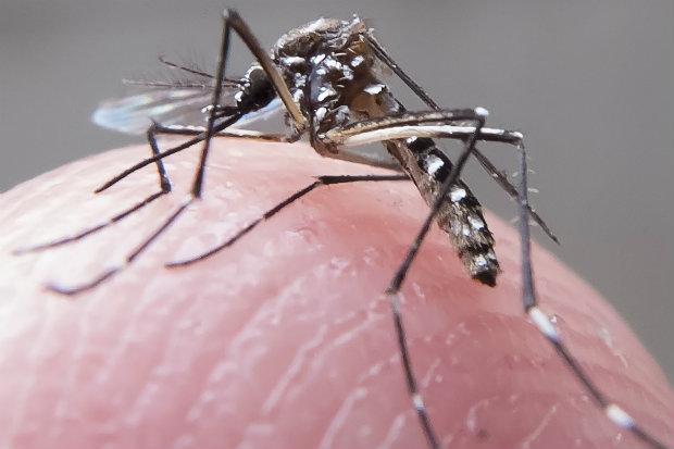 No período de quase cinco meses foram descartados 6.775 casos de Chikungunya e confirmados 4.869, com 20 óbitos. Foto: Rafael Neddermeyer/ Fotos Públicas.