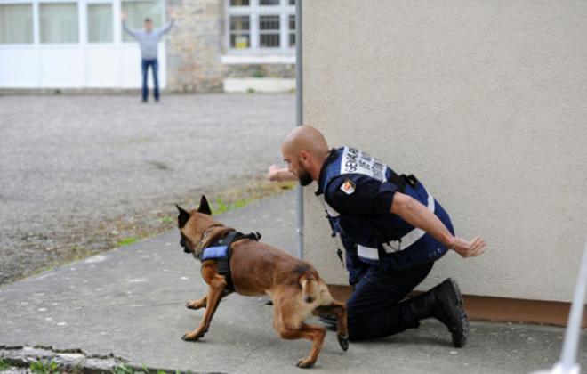 A maioria dos cães de hoje são uma mistura de seus antepassados %u200B%u200Basiáticos e europeus. Foto: AFP/Arquivos Remy Gabalda