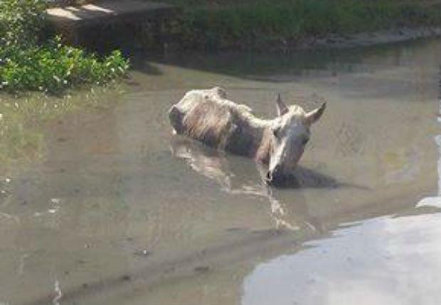 banco de jardim cavalo: bairro de Jardim Brasil II, em Olinda. Foto: Júnior Barbosa/ Facebook