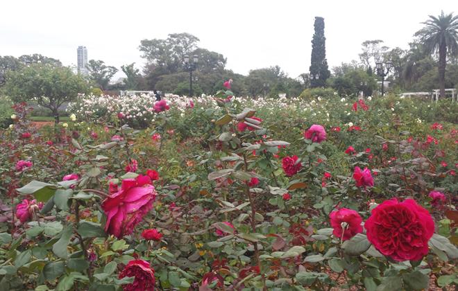 O jardim cheio de rosas é a principal atração do rosedal. Foto: Luciana Morosini/DP