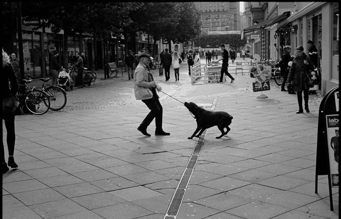 Participantes ainda serão instruídos sobre como se aproximar de um cão agressivo e como lidar com a agressividade. Foto: Ronny Olsson/Flickr