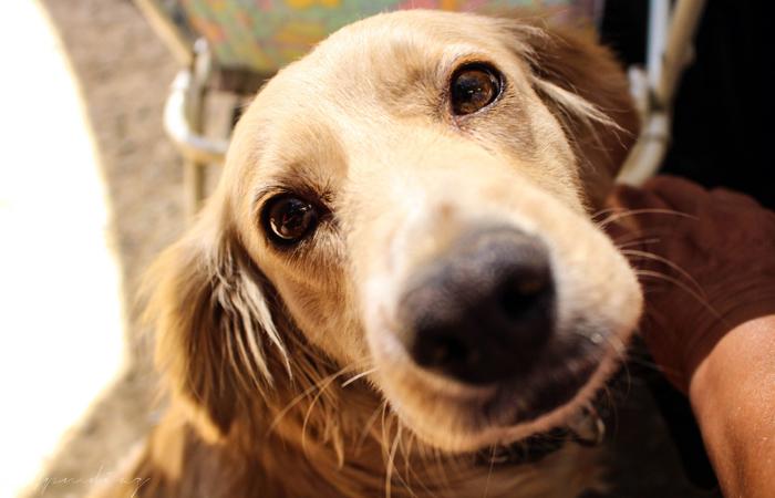 O Brasil têm, atualmente, 52,2 milhões de cães e 22,1 milhões de gatos. Foto: Juan Pablo Muños Diaz/Flickr