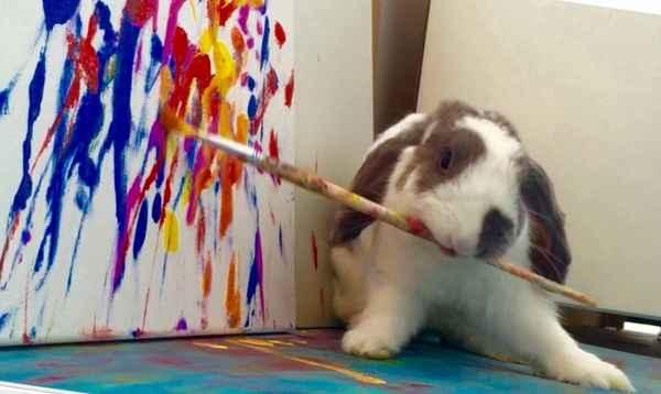 Coelhinho pinta telas e mostra seu talento. Foto: Facebook/Divulgação