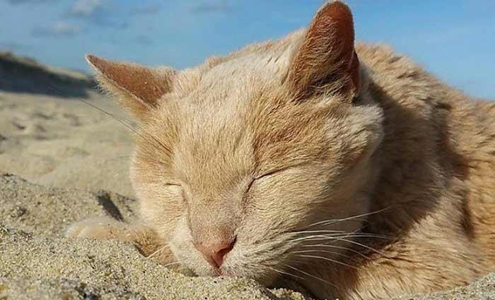 Tigger tira um cochilo em seu lugar preferido: a praia . Foto/Tigger%u2019s Story- The 21 yr. Old Cat & His Bucket List/Reprodução