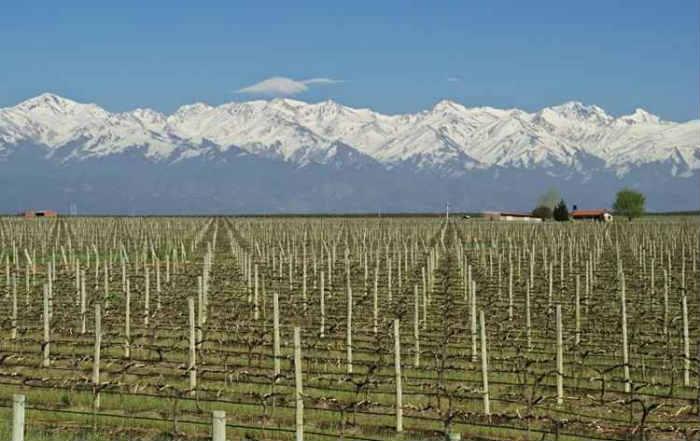 Centro vitivinícola mais importante da Argentina, Mendoza concentra 70% da produção de vinhos do país. Foto: Inprotur/Divulgação