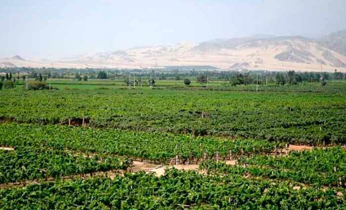 A mais antiga vinícola peruana é a Viña Tacama. Foto: Gerson Sakurai/Flickr