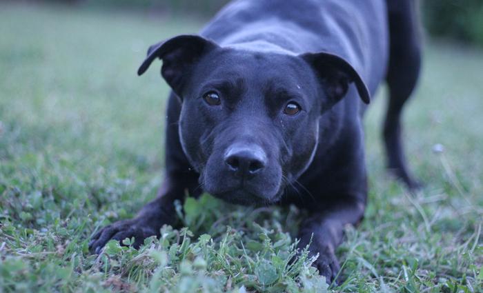 O levantamento identificou mais de 3,7 mil nomes diferentes de cães brasileiros. Foto: Dayna Ransley/Flickr