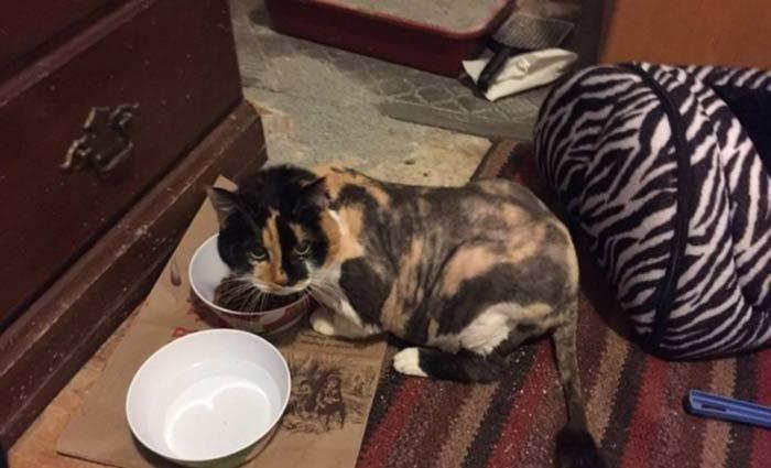 Atualmente, a gata vive com Russel e sua família. Foto: Western PA Humane Society/Divulgação