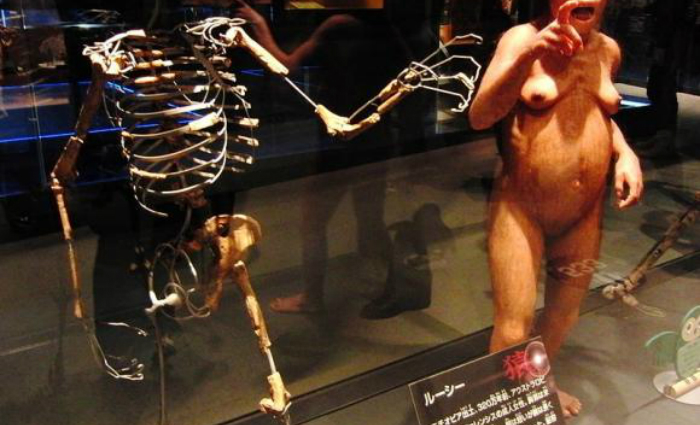 Fósseis da australopithecos Lucy. Foto: Momotarou2012/ Wikimedia Commons (Fósseis da australopithecos Lucy. Foto: Momotarou2012/ Wikimedia Commons)