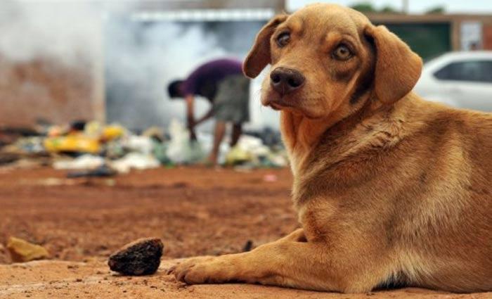 Proposta dispõe sobre a conduta de médicos veterinários e zootecnistas em relação a maus-tratos contra animais vertebrados. Foto: Minervino Júnior/CB/D.A. Press