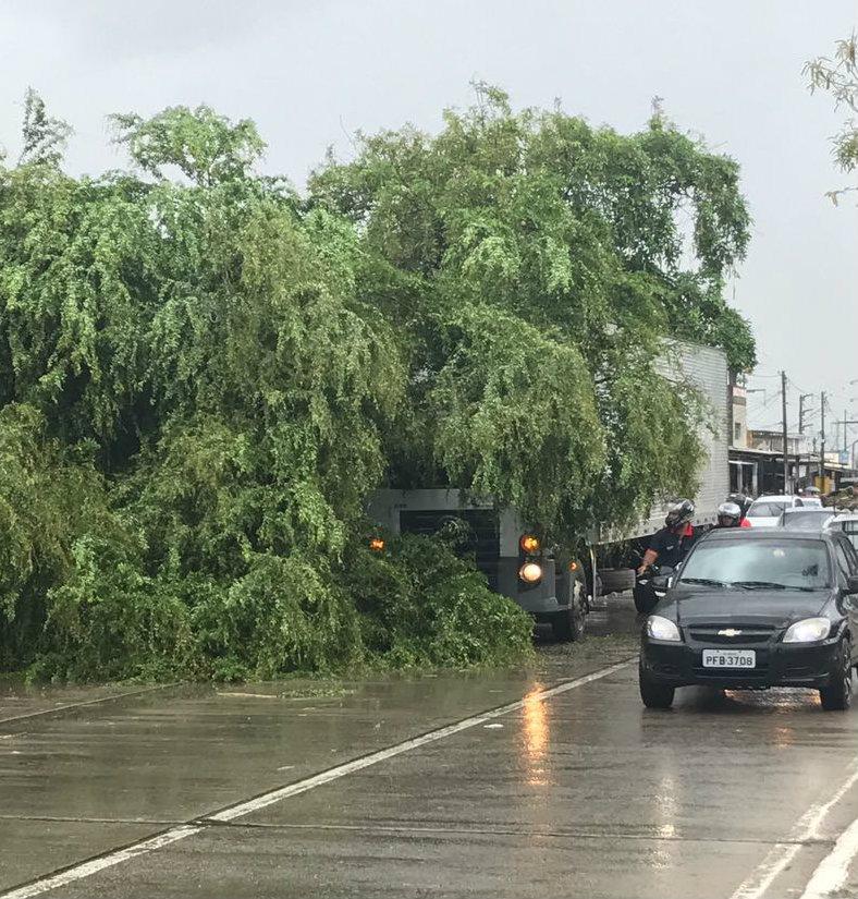 A árvore atingiu um caminhão que trafegava na Av. Abdias de Carvalho. Foto: Rafael Brasileiro/DP