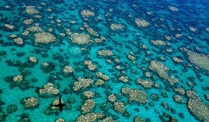 O branqueamento dos corais é um fenômeno de fragilização que é traduzido por uma descoloração, provocado pelo aumento da temperatura da água. Foto: Ed Roberts/Arc Centre of Excellence for Coral Reef Studies/AFP