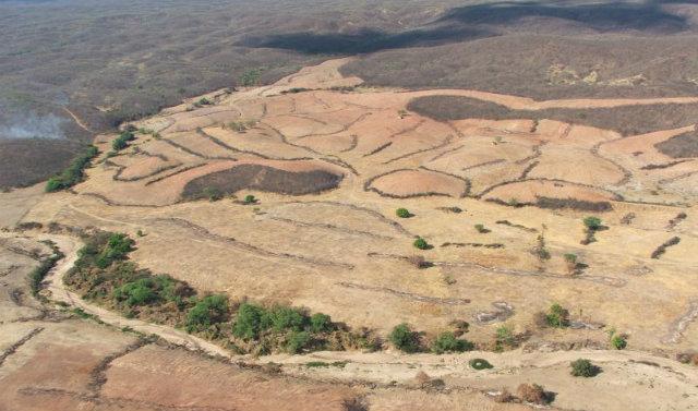 Área desmatada de Caatinga: pesquisa com base em dados de satélites. Foto: Correio Braziliense/Reprodução