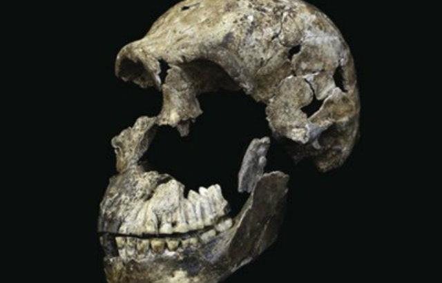 Crânio de Homo Naledi encontrado em câmara do complexo de cavernas Rising Star: primeira vez que há evidências de que outro hominídeo sobreviveu ao lado dos Homo sapiens na África. Foto: Correio Braziliense/Reprodução