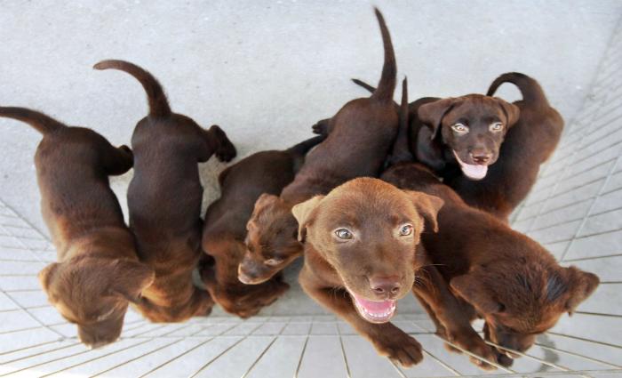 Esta é a primeira vez que o Socorro Animal participa da Semana de Mobilização Cidadã do Ceasa. Foto: Marcelo Horn/ GER (Esta é a primeira vez que o Socorro Animal participa da Semana de Mobilização Cidadã do Ceasa. Foto: Marcelo Horn/ GER)