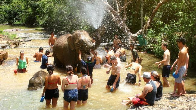 Não caia naqueles programas de turistas com animais no Centro ou Sul do país. Se quer contato com os elefantes, procure as fazendas próximas a Chiang Mai