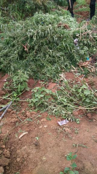 Uma amostra da droga foi levada para a Delegacia de Polícia Civil da cidade. Foto: Polícia Militar/Divulgação