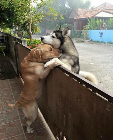Um abraço fraterno: amizade, apesar da distância. Foto: Oranit Kittragul