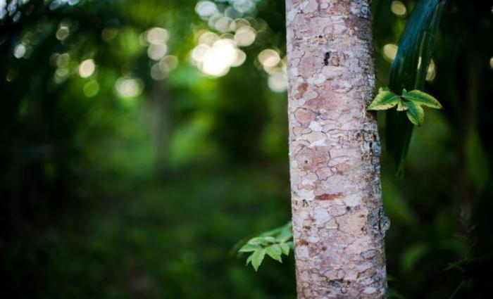A Floresta Nacional é uma categoria de unidade de conservação de uso mais restrito que a Área de Proteção Ambiental (APA). Foto: Marcelo Camargo/Arquivo/Agência Brasil (A Floresta Nacional é uma categoria de unidade de conservação de uso mais restrito que a Área de Proteção Ambiental (APA). Foto: Marcelo Camargo/Arquivo/Agência Brasil)