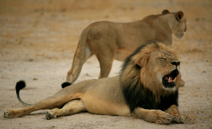 Foto: ZIMBABWE NATIONAL PARKS/AFP/Arquivos