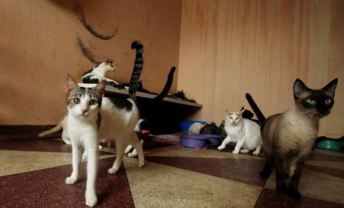 b5581a8b3 Abrigo temporário de animais no bairro do Prado precisa de ajuda ...