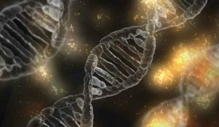Angela Saito, do Laboratório Nacional de Biociências, que utiliza a técnica, conhecida como Crisper em camundongos, diz que há risco de que a técnica produza mutações indesejadas. Foto: Pixabay