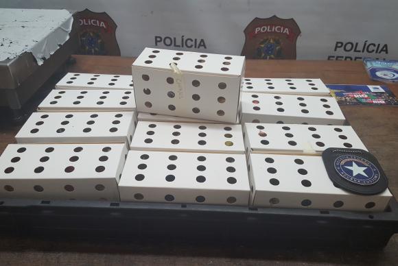 Canários belgas foram encontrados presos em pequenas caixas dentro da mochila do peruano. Foto: Divulgação/Polícia Federal
