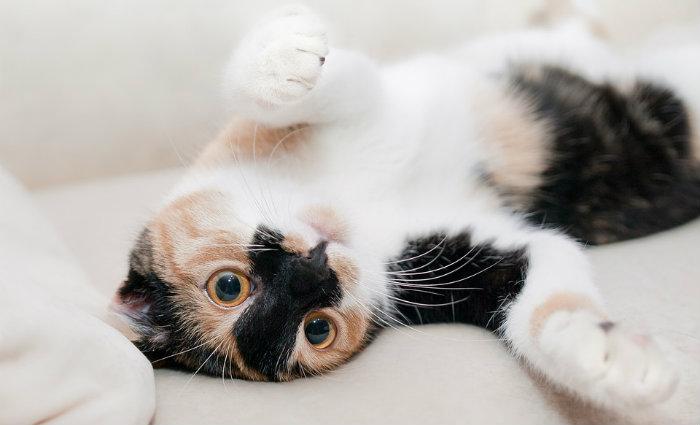 No mundo existem mais de 500 milhões de gatos domésticos. Foto: Pixabay