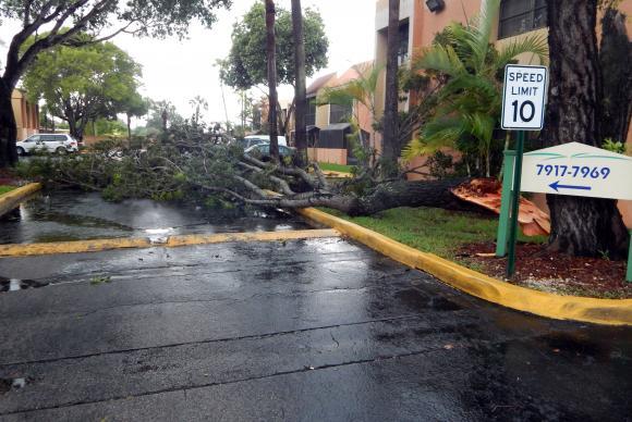 Árvore caída na pista devido aos fortes ventos das primeiras chuvas ligadas ao Furacão Irma em Miami. Foto: Latif Kassidi/EFE