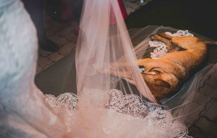 Acontecimento inusitado foi registrado pelo fotógrafo Felipe Paludetto e compartilhado nas redes sociais com um relato do episódio em forma de crônica. Foto: Arquivo Pessoal/Felipe Paludetto