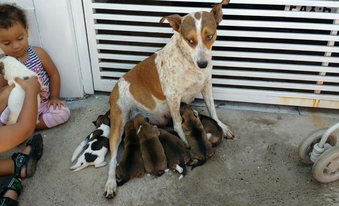 Protetora, a mãe estava escondida com os filhotinhos embaixo do sofá. Foto: Corpo de Bombeiros / Divulgação