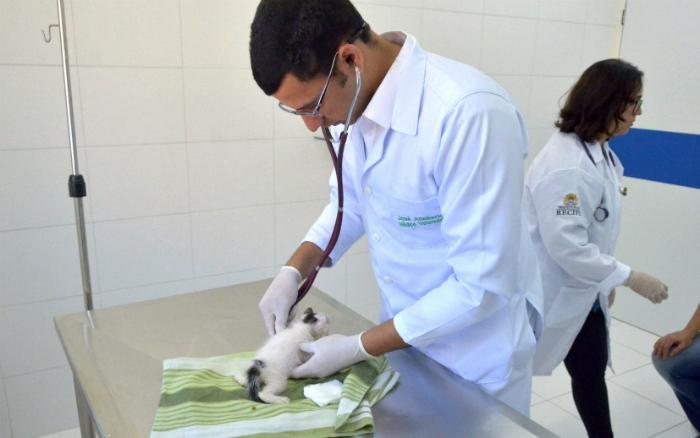 Castração de cães e gatos é feita gratuitamente. Foto: Luciano Ferreira/Arquivo PCR/Divulgação (Castração de cães e gatos é feita gratuitamente. Foto: Luciano Ferreira/Arquivo PCR/Divulgação)