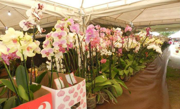 Festival de Flores chega aos Parques Santana e Dona Lindu. Foto: Divulgação
