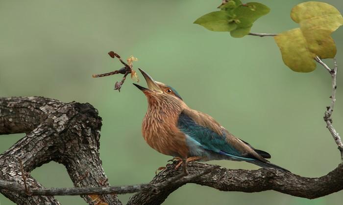 O flagrante da natureza recebeu uma menção honrosa na competição. Foto: Susmita Datta/Divulgação