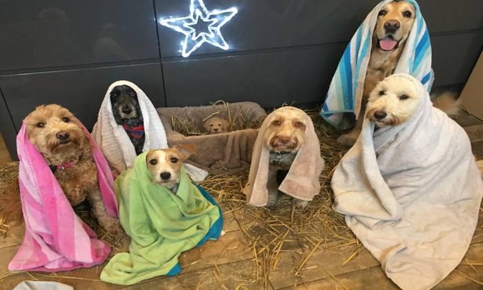 Foto: Wags To Riches Pet Services/Reprodução