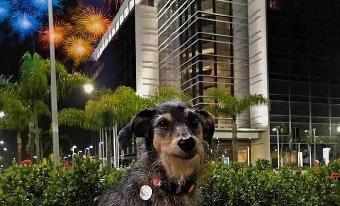 Estopinha, uma cadela famosa no Facebook, alerta para a necessidade de proteger os animais dos ruídos - Foto: Reprodução Facebook